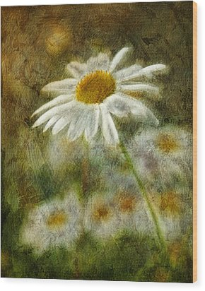 Daisies ... Again - P11at01 Wood Print