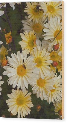 Daisies Wood Print by Barb Baker