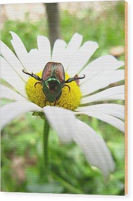 Daisies Bug Wood Print by Jennifer E Doll