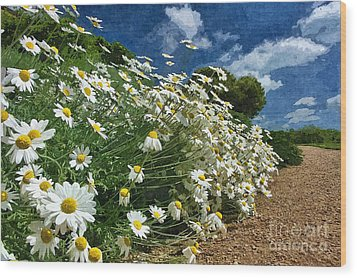 Daisies By The Path - Photo Art Wood Print