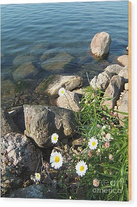 Daisies By The River Wood Print by Margaret McDermott