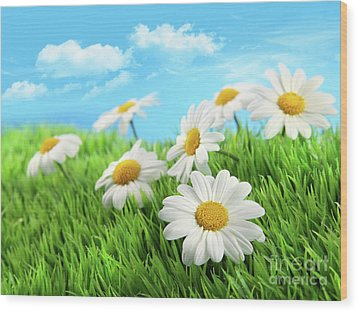 Daisies In Grass Against A Blue Sky Wood Print by Sandra Cunningham