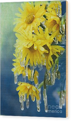 Daisies In Ice Wood Print by Betty LaRue