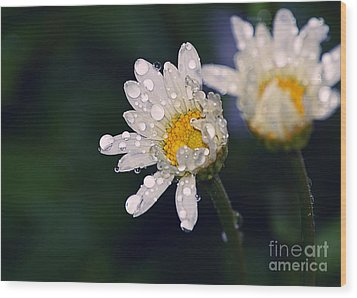 Daisies In The Rain Wood Print