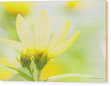Daisies In The Sun Wood Print