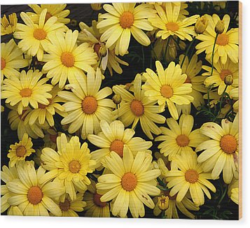 Daisies Wood Print by John Bushnell
