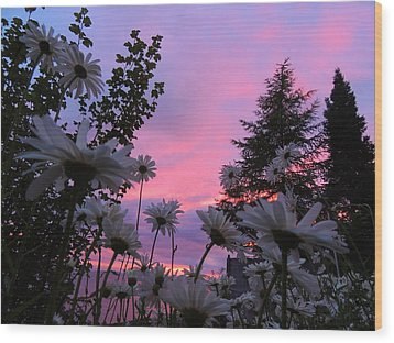 Daisies Kissing Dusk Wood Print