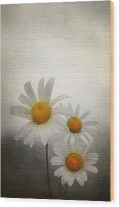 Daisies Wood Print by Svetlana Sewell