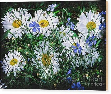 Daisies With Blue Flax And Bee Wood Print