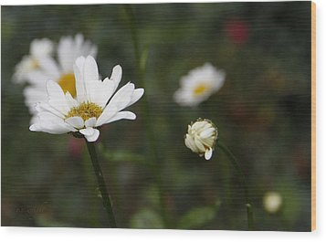 Smiling Daisies Wood Print by Yvonne Wright