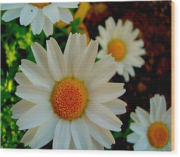 Daisy 1 Wood Print by Tamara Bettencourt