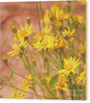 Daisy A Day Series  Wood Print by Julie Lueders