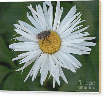 Daisy And Bee Wood Print