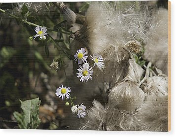 Daisy And Dandelion Wood Print by John Holloway