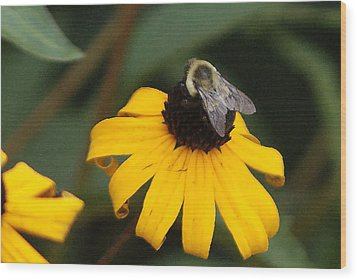 Wood Print featuring the photograph Daisy Bumble Bee by B Wayne Mullins