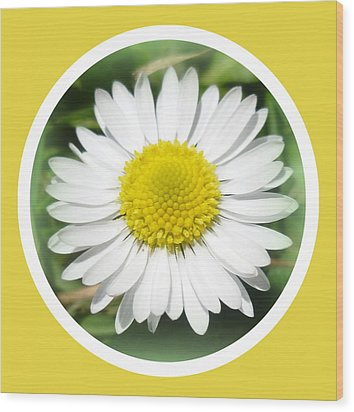 Daisy Closeup Wood Print by The Creative Minds Art and Photography