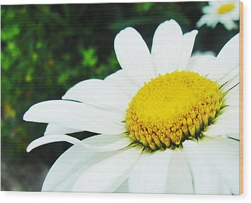 Wood Print featuring the photograph Daisy Daisy by Tiffany Erdman