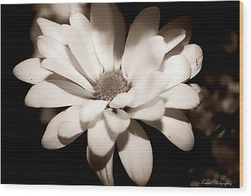 Wood Print featuring the photograph Daisy by Debra Forand
