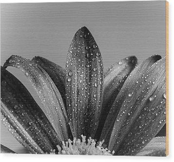 Daisy Dew B/w Wood Print