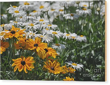 Daisy Fields Wood Print by Bianca Nadeau