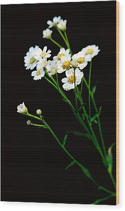 Daisy Flower Bouquet  Wood Print