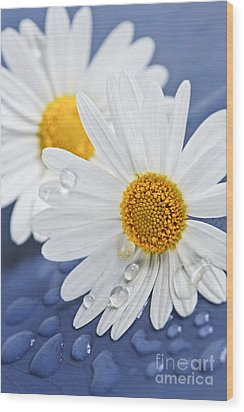 Daisy Flowers With Water Drops Wood Print by Elena Elisseeva