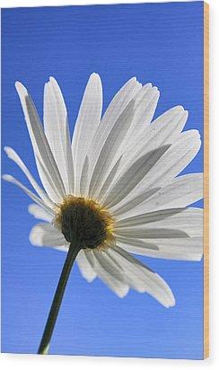 Daisy Wood Print by Goyo Ambrosio