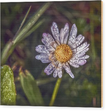 Wood Print featuring the photograph Daisy by Hanny Heim