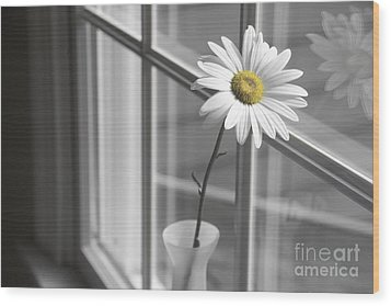 Daisy In The Window Wood Print