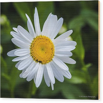 Wood Print featuring the photograph Daisy by Phil Abrams
