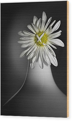 Daisy Pom Wood Print by Nancy Strahinic