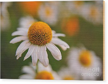 Daisy Power Wood Print by Terri Gostola