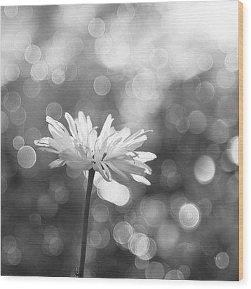 Daisy Rain Wood Print by Theresa Tahara