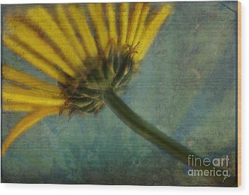 Daisy Reach Wood Print