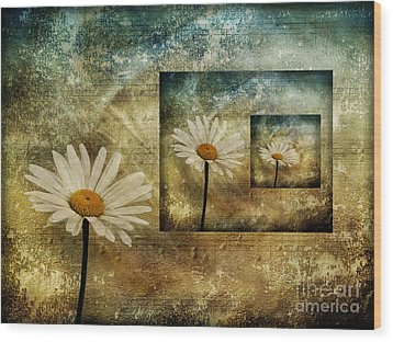 Wood Print featuring the photograph Daisy Shadows by Shirley Mangini