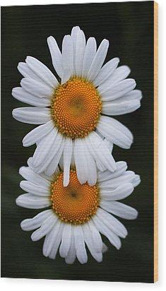 Wood Print featuring the photograph Daisy Twins by Haren Images- Kriss Haren