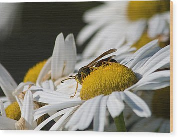Wood Print featuring the photograph Daisy With Friend by Greg Graham