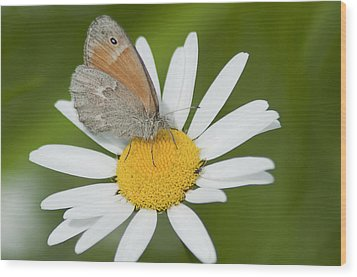 Daisy's Visitor Wood Print