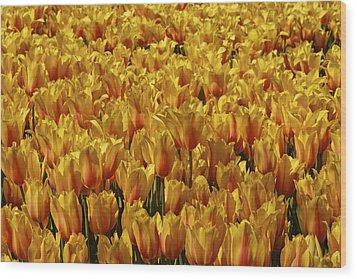 Dallas Blooms Wood Print by John Babis