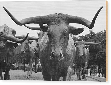 Dallas Texas Pioneer Plaza Longhorn Cattle Drive Bronze Sculpture Black And White Wood Print by Shawn O'Brien