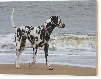 Dalmatian By The Sea Wood Print by Gordon Auld