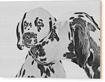 Dalmatians - A Great Breed For The Right Family Wood Print by Christine Till