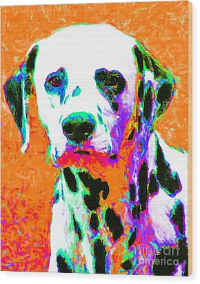 Dalmation Dog 20130125v2 Wood Print by Wingsdomain Art and Photography