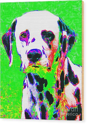 Dalmation Dog 20130125v3 Wood Print by Wingsdomain Art and Photography