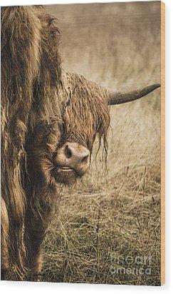 Highland Cow Damn Fleas Wood Print