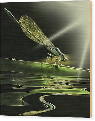 Damsel Dragon Fly  With Sparkling Reflection Wood Print