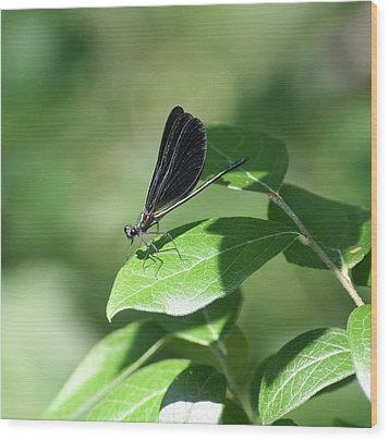 Wood Print featuring the photograph Damselfly  by Karen Silvestri