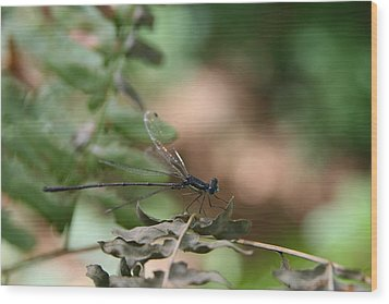 Wood Print featuring the photograph Damselfly by Neal Eslinger