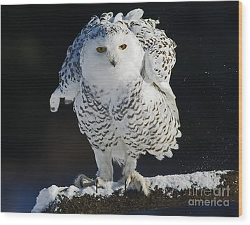 Dance Of Glory - Snowy Owl Wood Print by Inspired Nature Photography Fine Art Photography