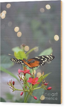Dance Of The Butterfly Wood Print by Carla Carson